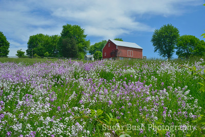 Spring in Ohio's Amish Country