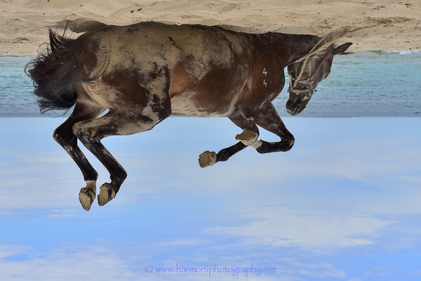 Harmoni Photography For the Love of Horses