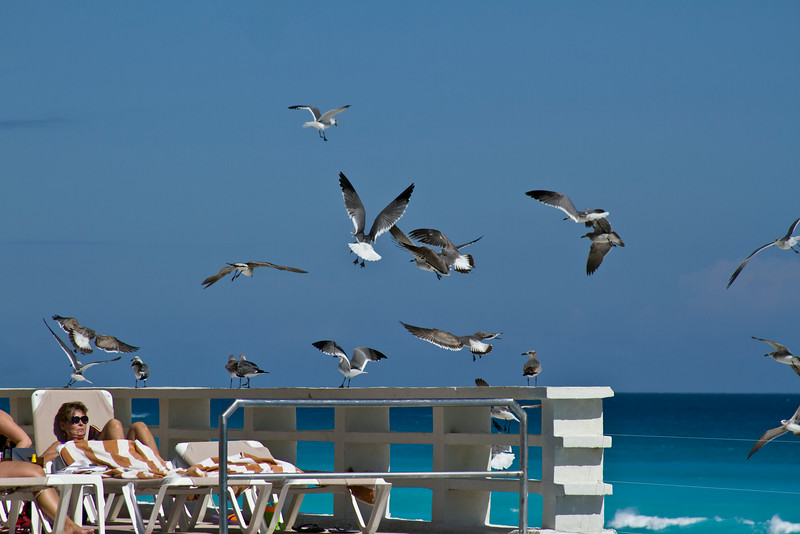 Gull's by the Pool