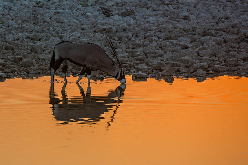 Oryx silhouette at waterhole
