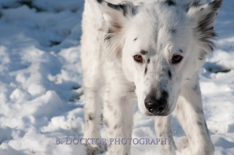 Hooly & Justy Jan 09-2.jpg