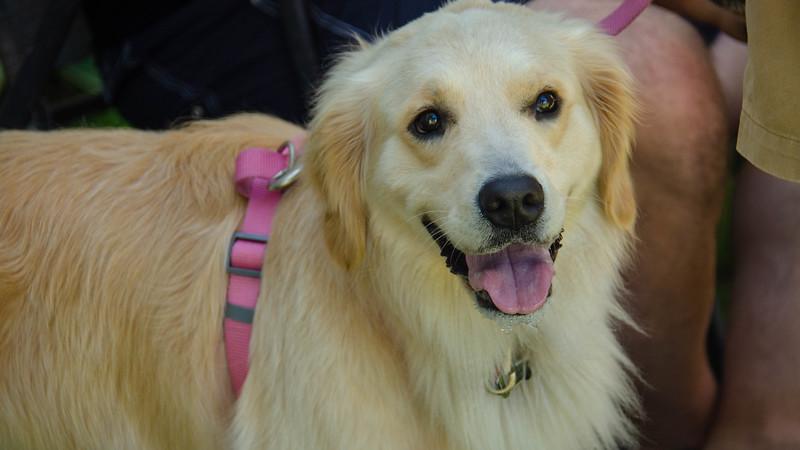 PuppyParty18-316.jpg