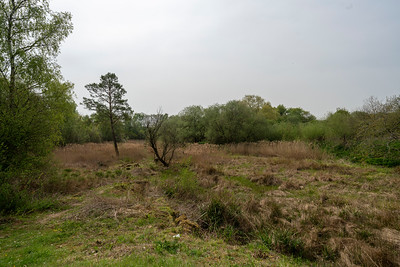Dry Sandford Pit Nature reserve
