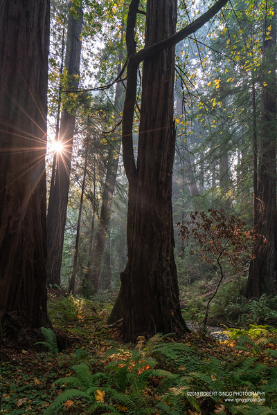 Muir Woods-7112.jpg