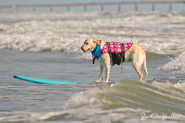 Pups and Sups 2019