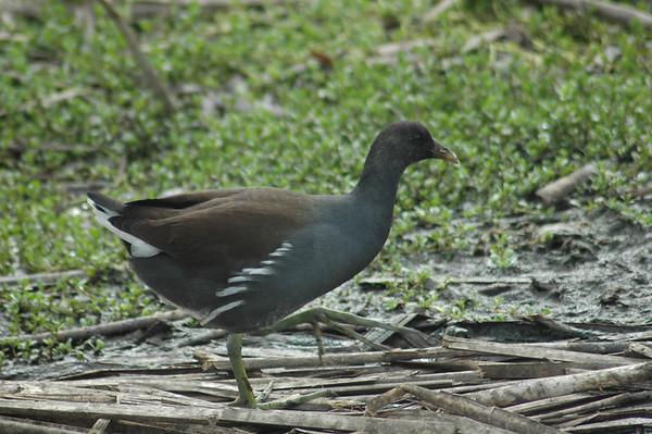 Journal Site 56: Leonabelle Turnbull Birding Center