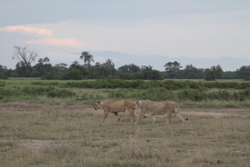Kenya 2019 #2 1842.JPG