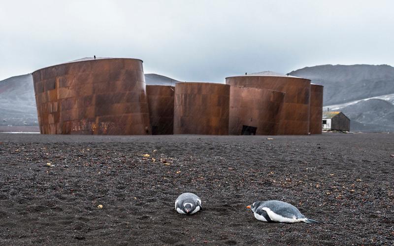 Whaling Station_Deception Island-1.jpg
