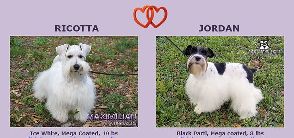 Ricotta & Jordan Puppies, DOB 7/06/2020
