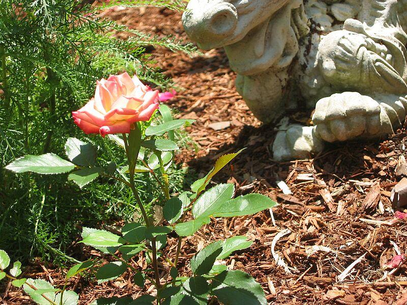 garden-2005-07-0264_std.jpg