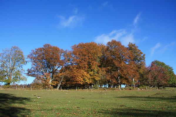 Fotos MG Oktober 2011