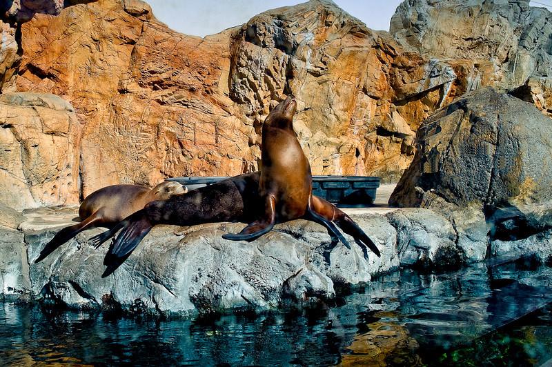 LB-Aquarium-II_23.jpg