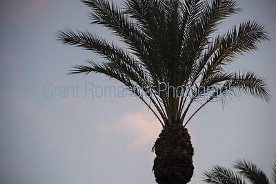 Good Morning Corona March 2019