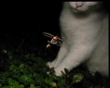 frame-firefly