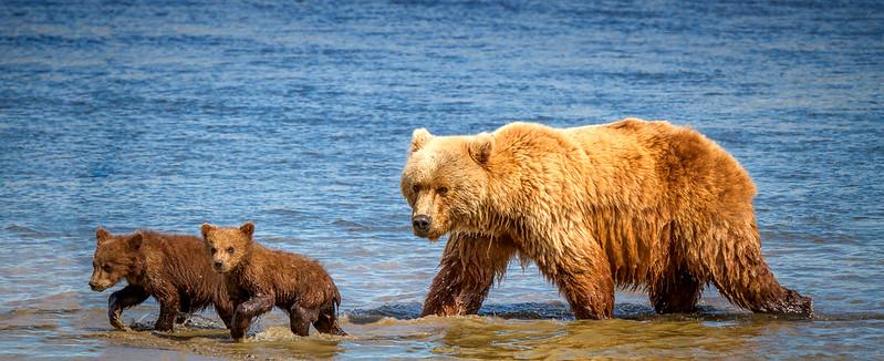 2015-07-18_Bears_Canon7D_6773-Edit-Edit.jpg