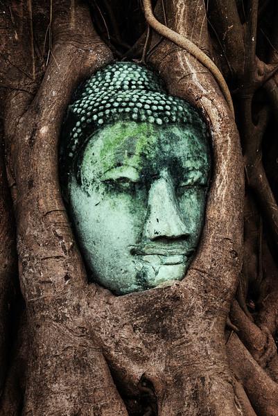 Entombed Buddha.jpg