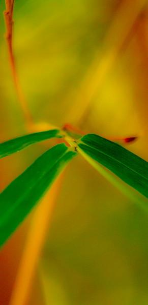 Bamboo Tropicals-7881.jpg