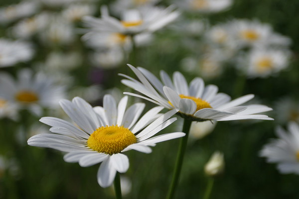 Flowers_060510_0011.JPG