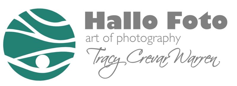 HalloFoto TCE.PNG
