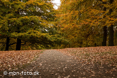 Efterår i Aarhus 31/10 2016
