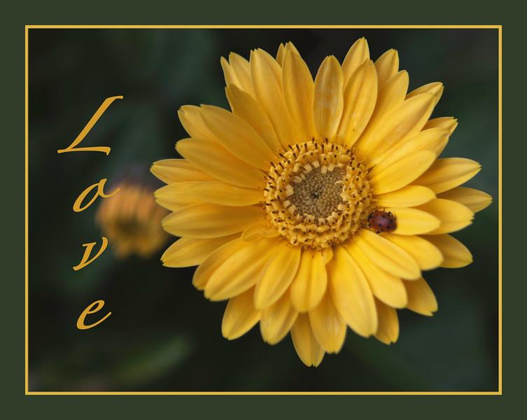 Love_YellowFlower_LadyBug_664A9980-2.jpg