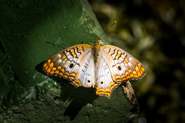 Arnold Butterfly Haven - September 29, 2018