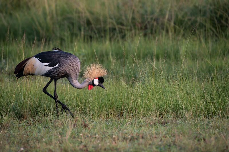Uganda_T_QE-210.jpg