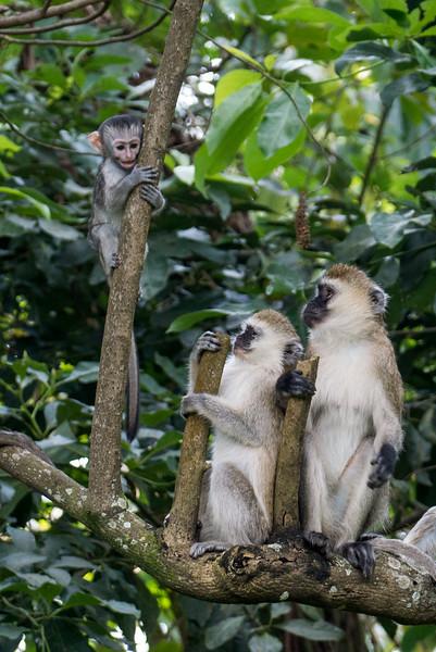 Nyugwe-Rwanda-65.jpg