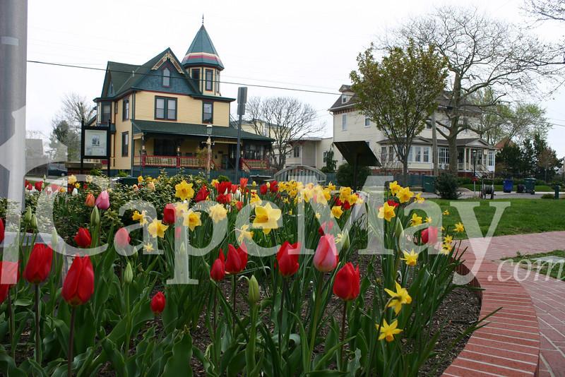 Spring blooms in Wilbraham Park.jpg