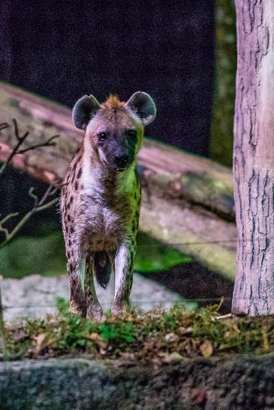 Night-Safari-9695.jpg