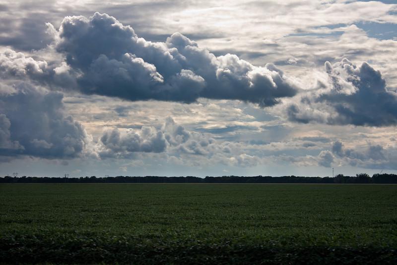 Soybean fields forever