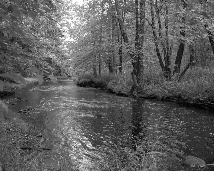Cathy's Brook.jpg