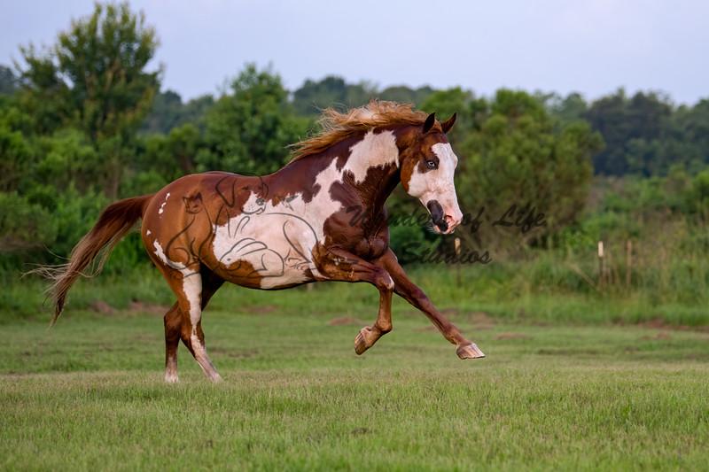 Kris's Horses