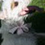 farley pups 131-2.jpg