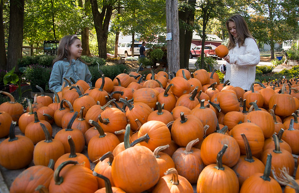 09/30/19 Wesley Bunnell | StaffrrMadelyn Rogers, age 11, and Emily Rogers, age 8, pick out pumpkins during a family trip to Karabin Farms in Southington on Monday afternoon.