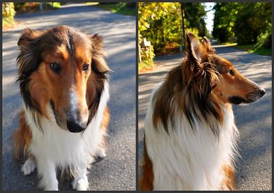 A Walk October 13, 2010