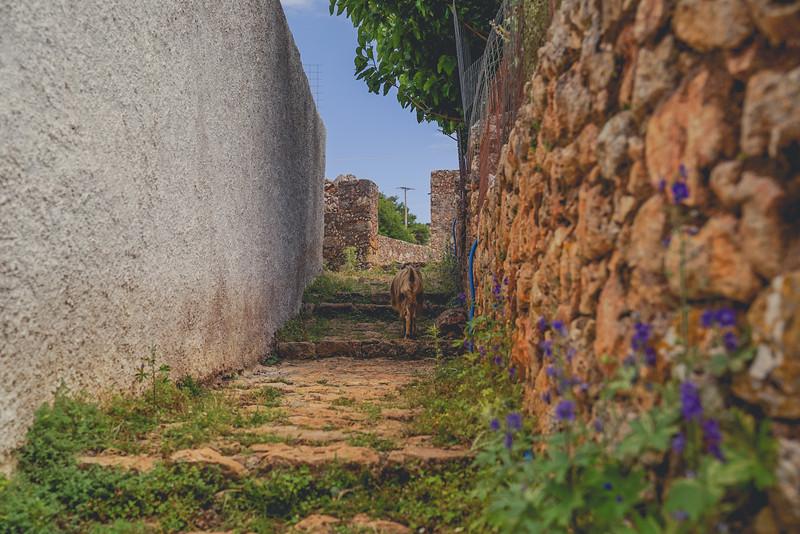 Crete 06.17-167.jpg