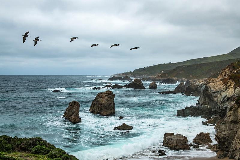 Pelicans in Big Sur