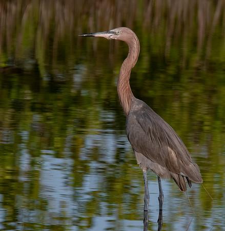 Black Point Dr & Blue Heron Wetlands - June 18, 2021