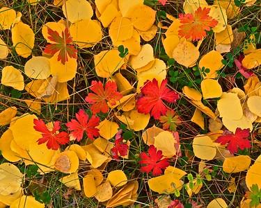 Pagosa Fall Color, October 2012