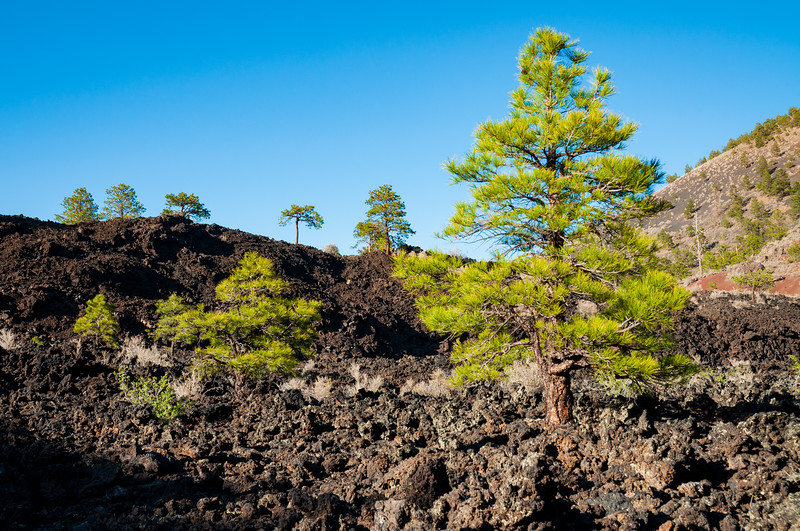 Dried Lava Rock at Sunset Crater National Monument