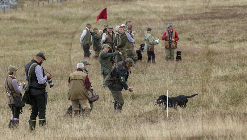 GUNDOG EVENTS - TEST & TRIALS
