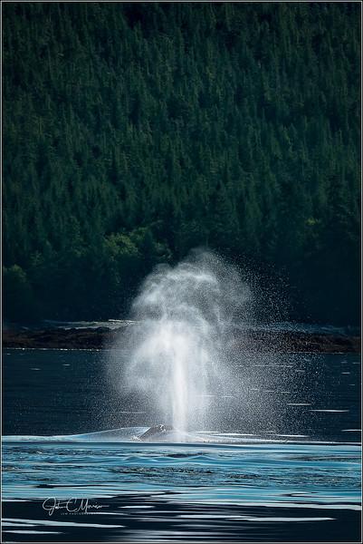 SR3_4813 Whale blow LPN W.jpg
