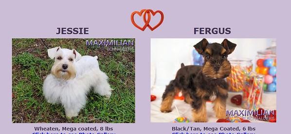 Jessie & Fergus Puppies, DOB 5/08/2020