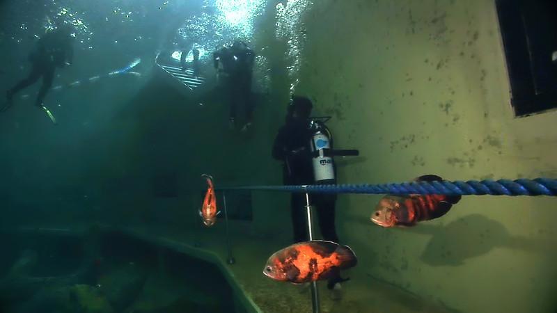 Underwater Walk Edit 45secs.00_00_59_13.Still073.jpg