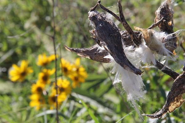 Fort Wayne Nature Preserves