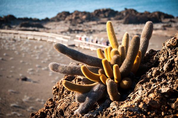 Treasures of Ecuador 2011