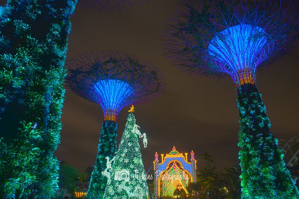 2015-12-28 Garden by the Bay