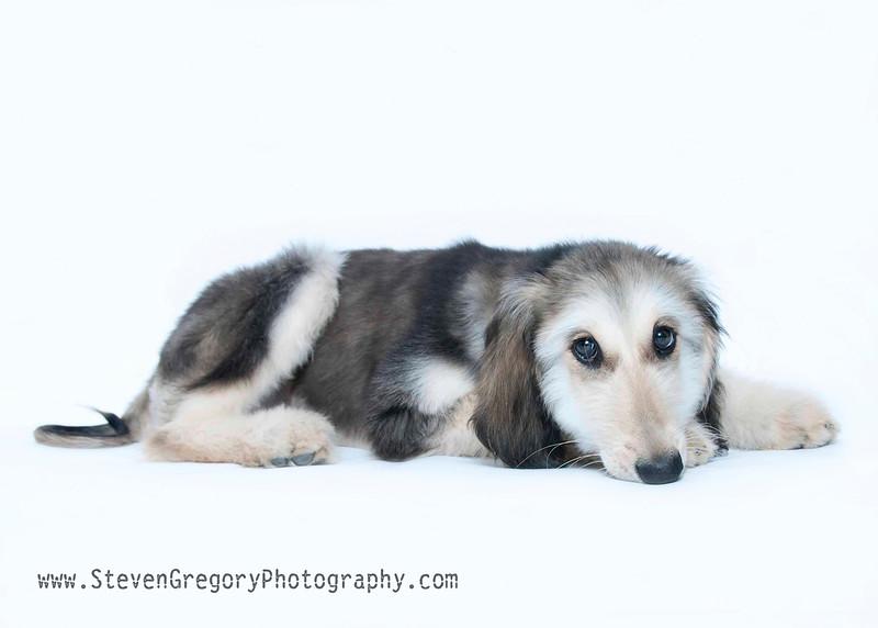 _DSC9810 Steven Gregory Pet Photography.jpg