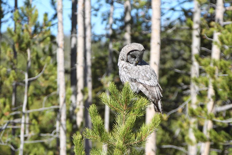 Fall Trip Wyoming & Montana 2016 (87 of 193).jpg